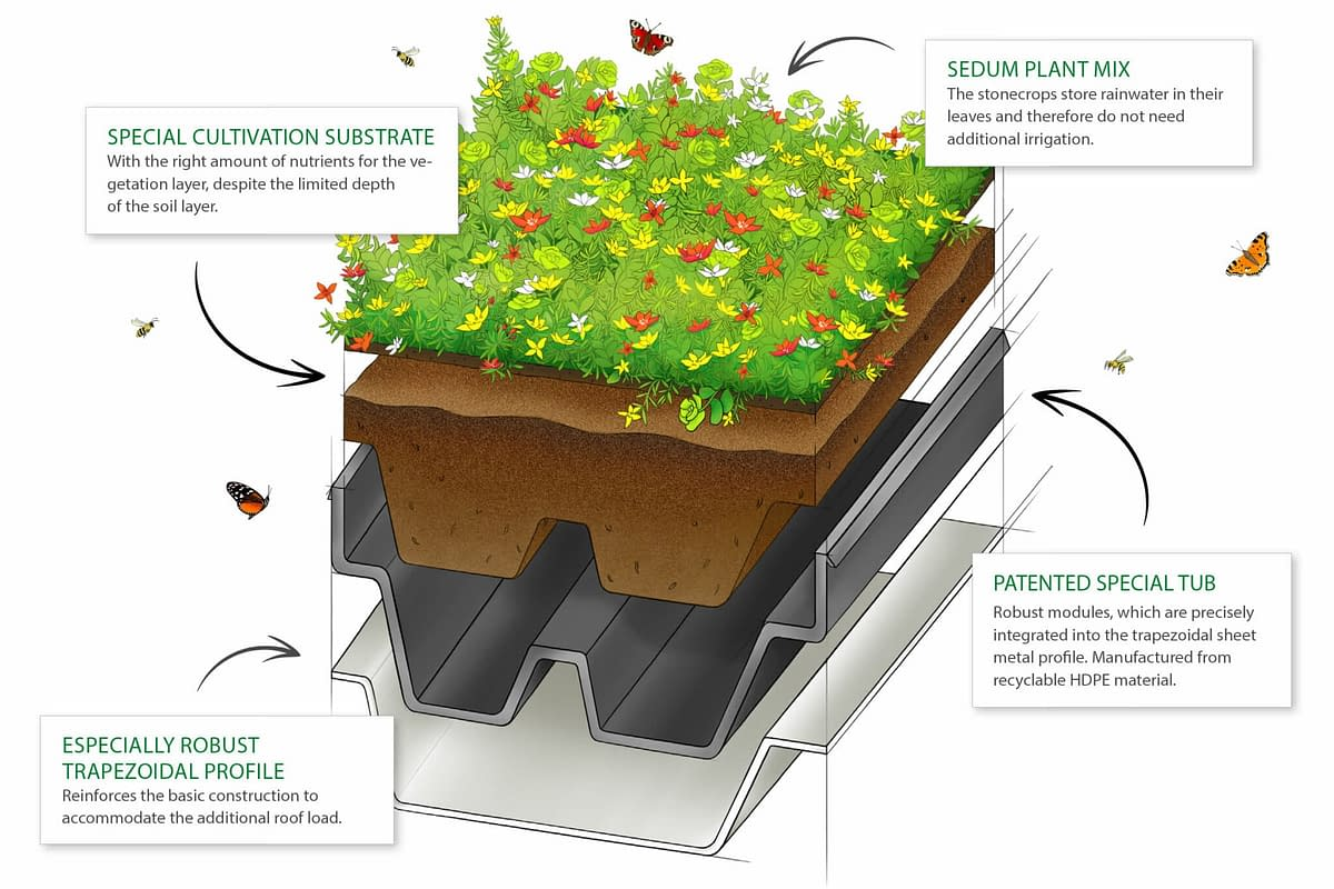 A cross-section of the GreenPlus green roof system